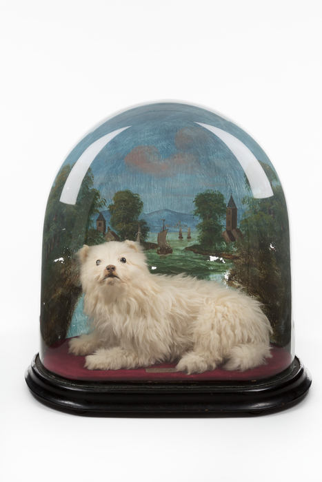 Maltese toy dog in glass dome