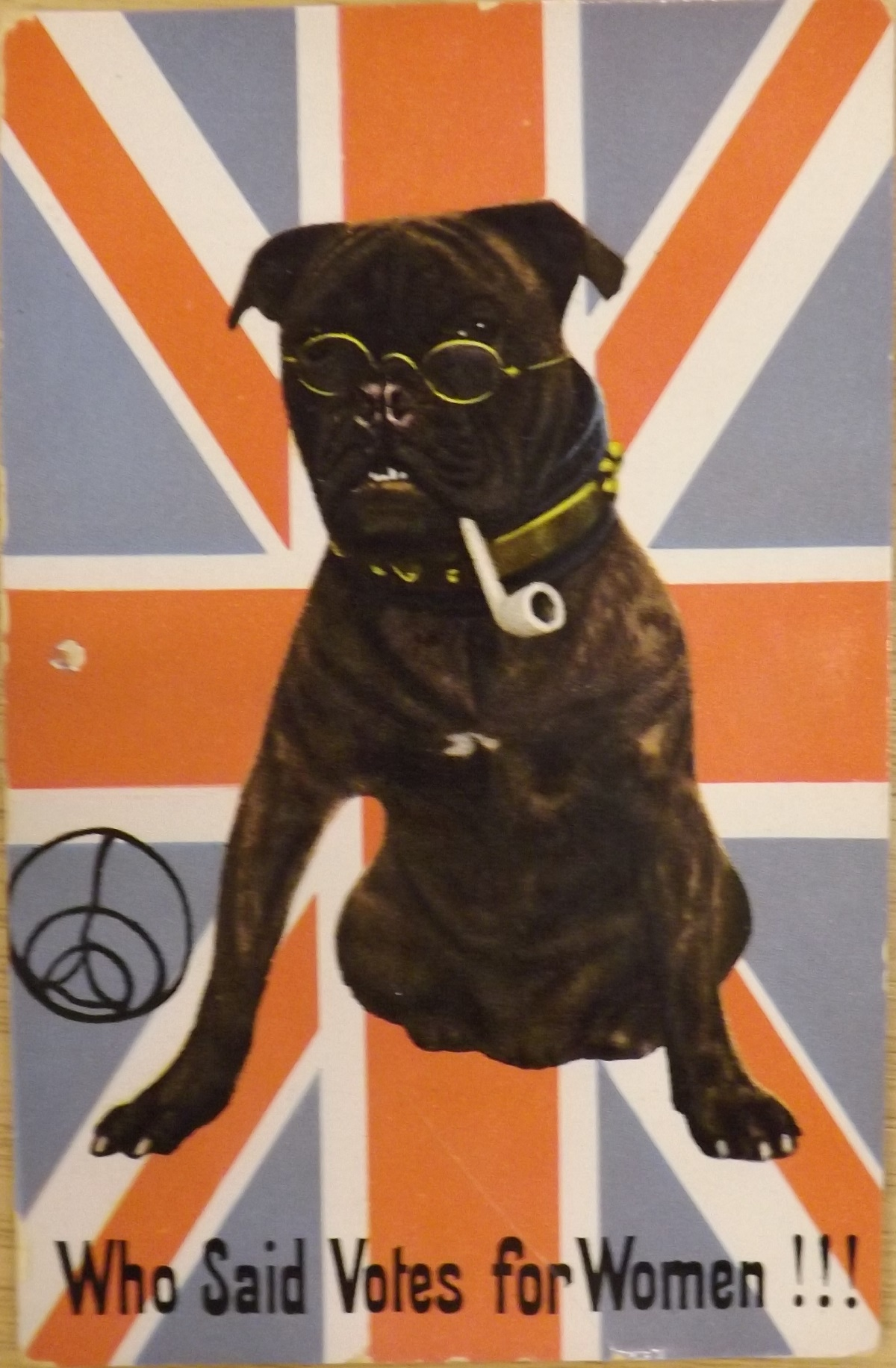 Political satirical card of the suffragette period - Bulldog smoking a pipe, on Union Jack background, with the caption 'Who said Votes for Women!!!'