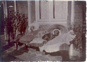 45.1982.15 Image of three dogs in bonnets, The Beeches, Oatlands Drive, Weybridge